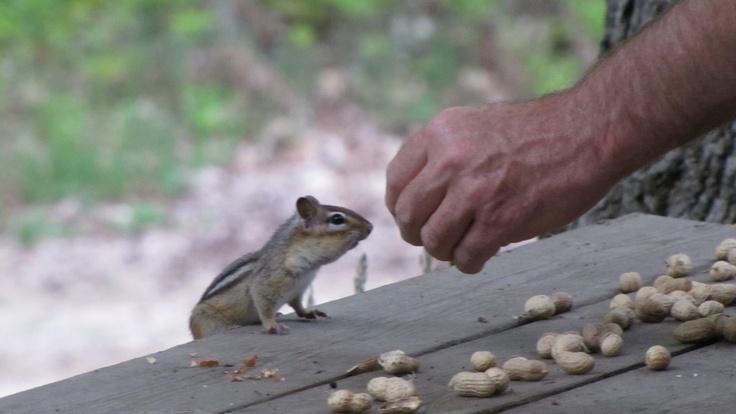 Friendly Chipmunk at Sauble Beach :)