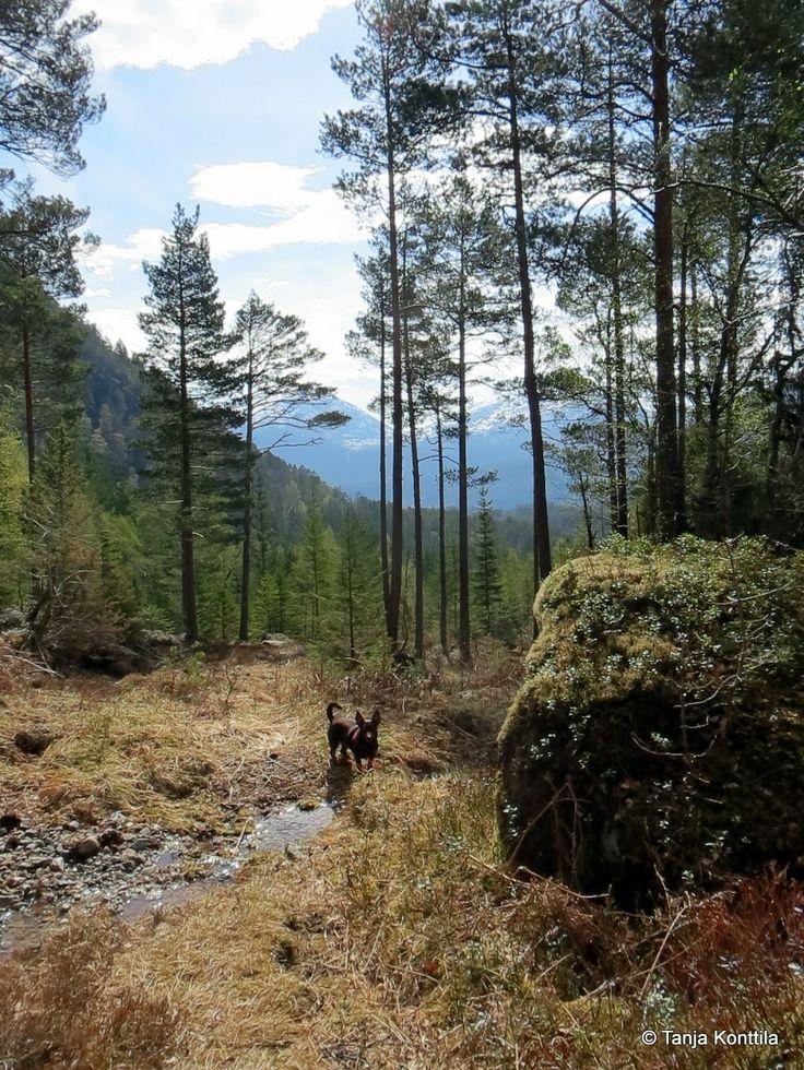 Trail running Norway