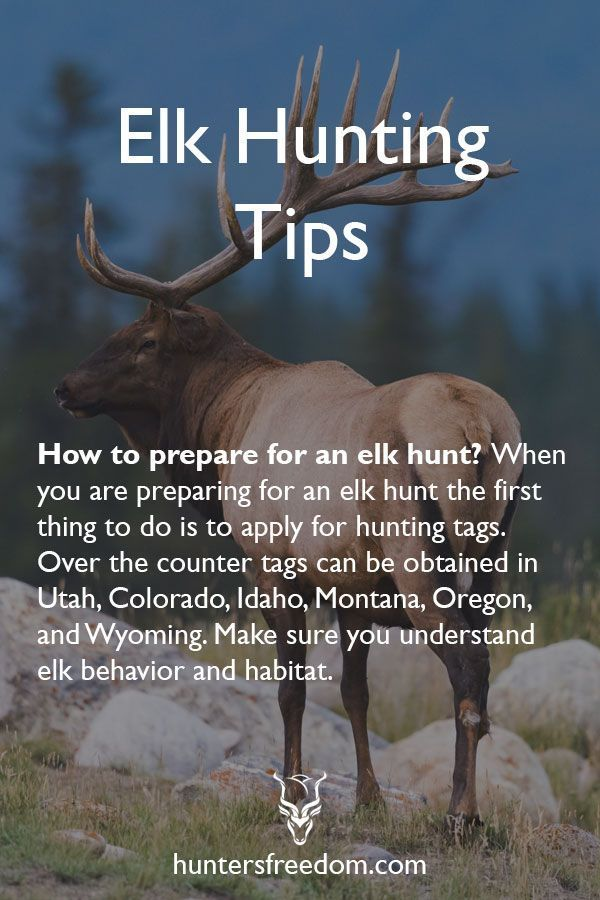 Elk Hunting Tips (Beginners Guide | Hunting for Food | Elk