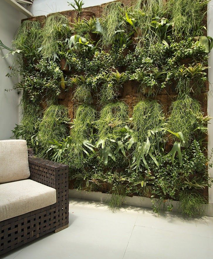 Jardim de epífitas em interiores - www.casaecia.arq.br Cursos on line: Design de…