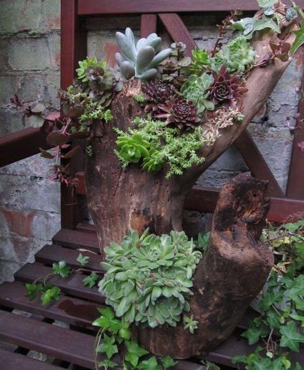 Plante suculente - 13 idei pentru amenajarea gradinii cu ele