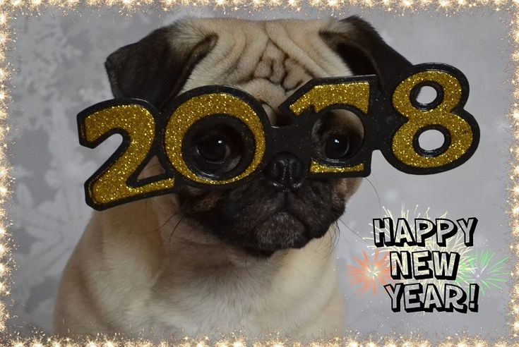 Happy New Year! #pug #pugs #dog #NewYear #New Year #2018 #party #costume #celebrate #pets