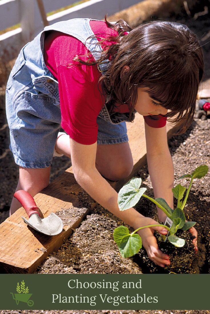 Choosing And Planting Vegetables Planting Vegetables Vegetables Types Of Vegetables