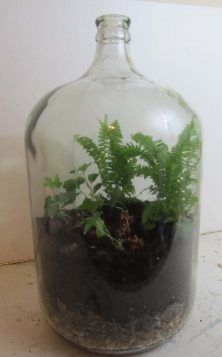 """how to"" video shows how to make a 6gal Terrarium like this!"