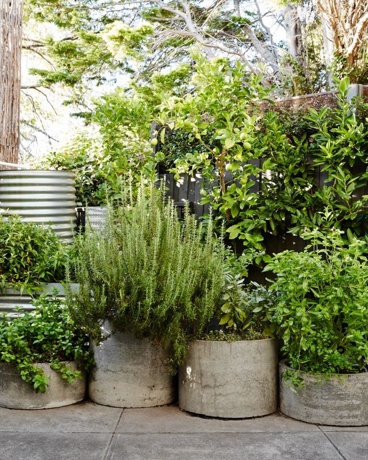 Concrete herb planters. Photo – Annette O'Brien