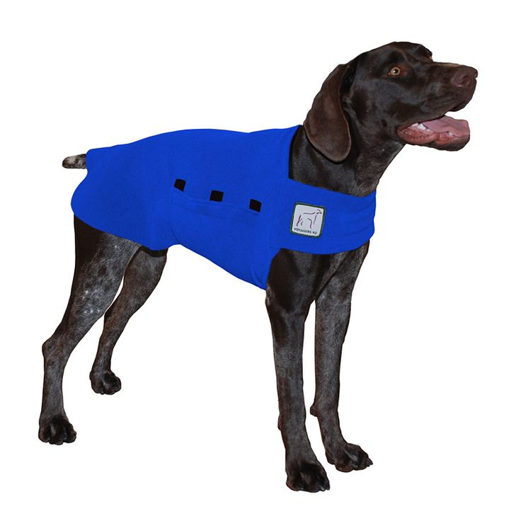 Blue German Shorthaired Pointer GSP Dog Tummy Warmer, great for warmth, anxiety and laying with our dog rain coat. High performance material. Made in the USA