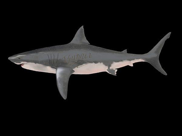 Ilustración Digital - Tiburón Blanco on Behance