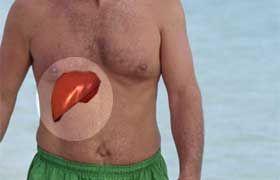 Le foie : Probablement l'organe le plus important de votre corps, pas de santé possible avec un foie surchargé ou intoxiqué.