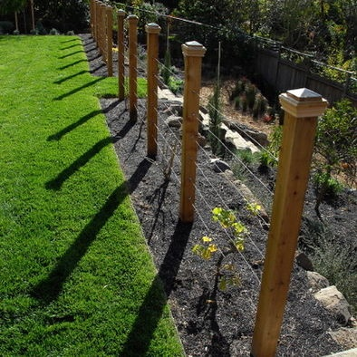Contemporary Landscape Privacy Screen Design, Pictures, Remodel, Decor and Ideas - page 20