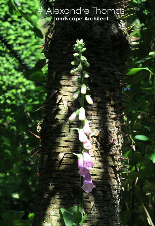 41 best images about jardin agapanthe agapanthus garden for Alexandre jardin