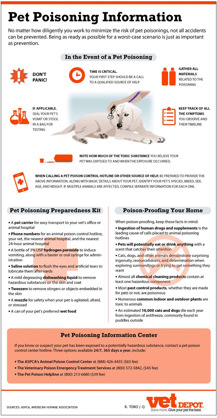 Poison proofing your house, what to do if your pet is poisoned. Most common poison items: human medications & supplements, household cleaners, insecticides, anti-freeze...