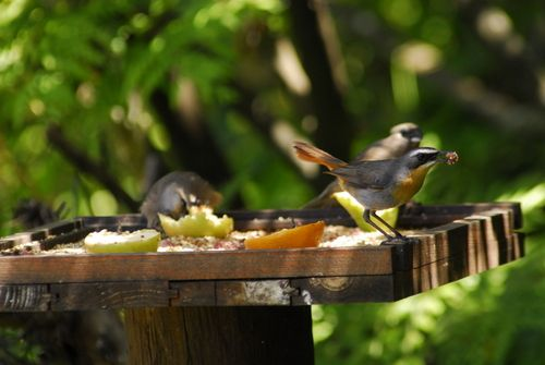 Winter is a notoriously difficult season for birds. With survival foremost on their minds, birds can easily be attracted to your carefully landscaped garden. Find out how ...