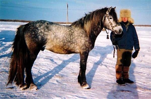 Коневодство лесной зоны и группа лесных пород лошадей