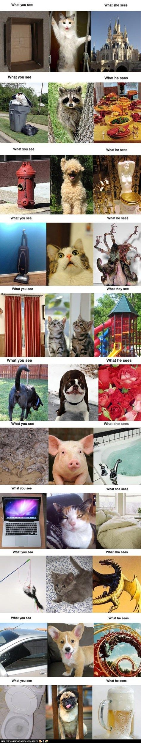 funny pictures - What You See vs. What Animals See