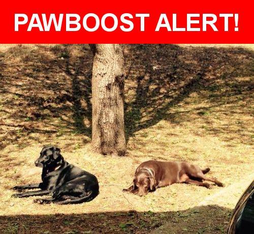 Please spread the word! Lily & Remi was last seen in Fayetteville, GA 30214.    Nearest Address: New Hope Road, Fayetteville, GA, United States