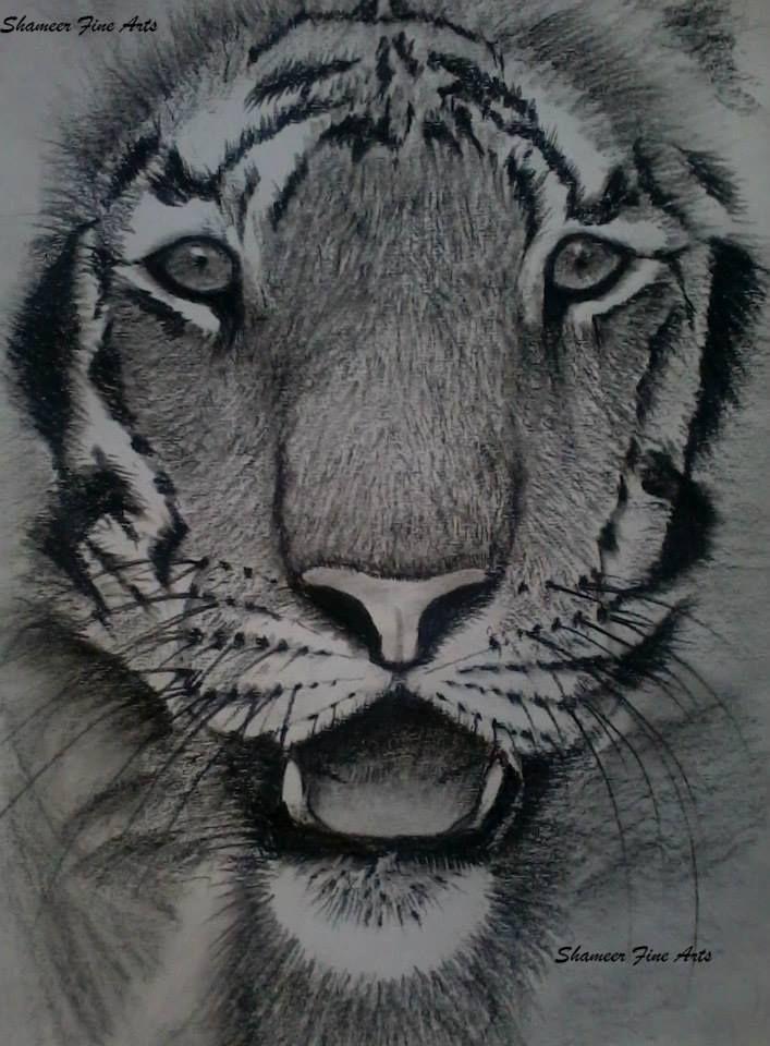 Wild Life - Royal Cat