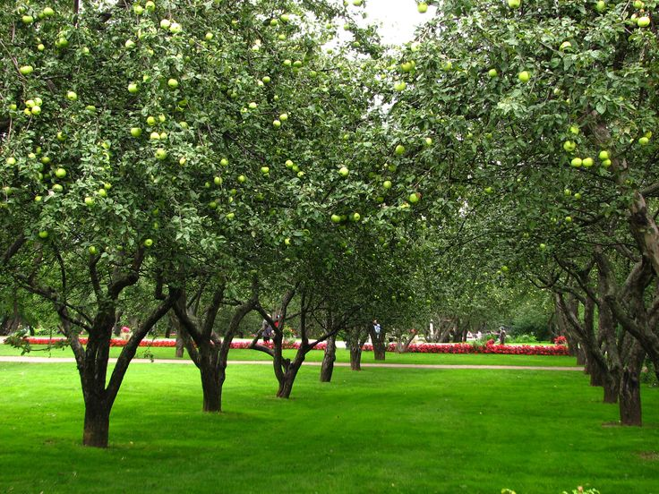 Home My Heaven: Home Improvement Blog UK: Planning an Orchard