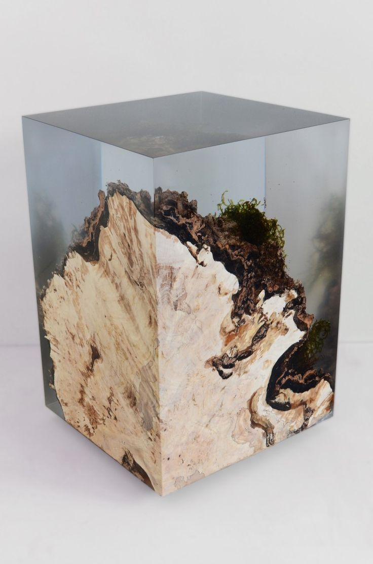 Tree stump set into resin preserves all the surface moss and other details.
