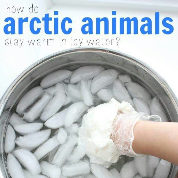 How do artic animals stay warm