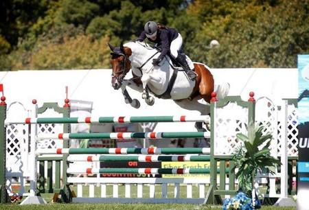 Showtym Cassonova - Other Horse Breed - Jumper