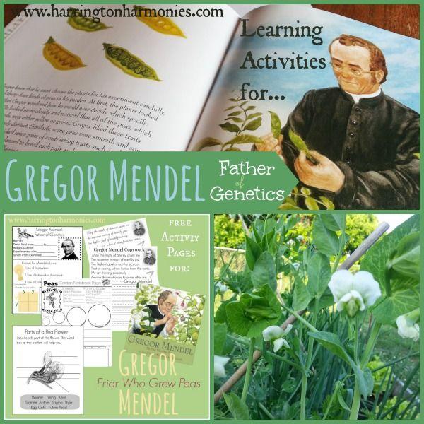 gregor mendel lab Gregor mendel historical facts 1:gregor johann mendel was an austrian monk and biologist whose work on heredity became the basis of the modern theory of genetics 2.