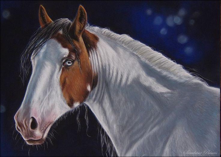 pinto, cheval pastel sec