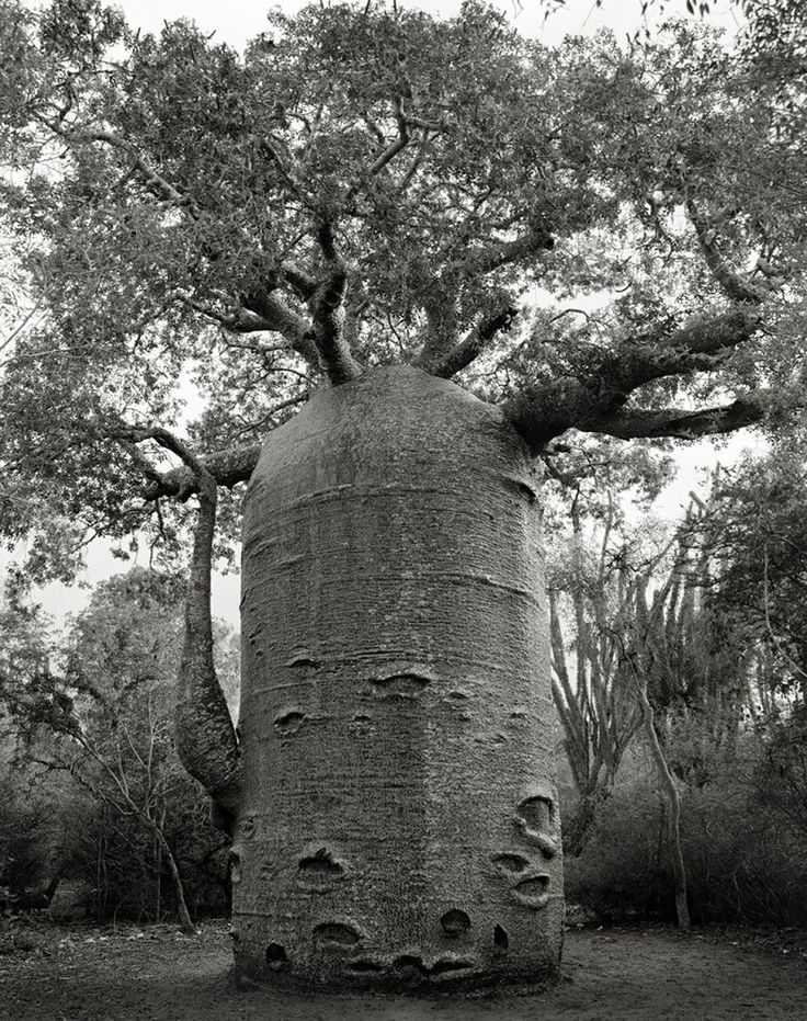 Trees by Beth Moon