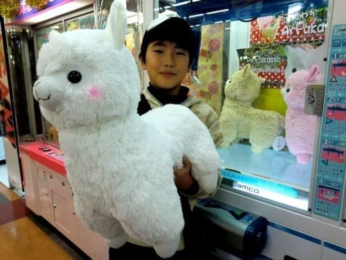 Arpakasso...It's an alpaca stuffed animal toy that's got a cult following in Asia.