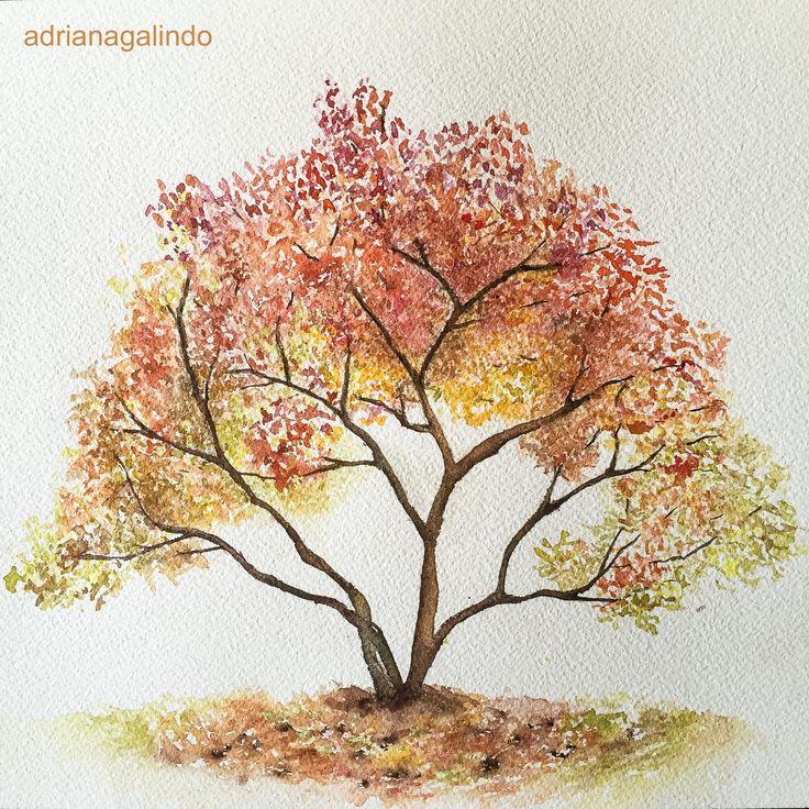 Persimmon tree, n.21, watercolor / 40treesproject  Caquizeiro, árvore 21, aquarela 21 x 30 cm adrianagalindo / caqui / natureza / nature / outono / autunm drigalindo1@gmail.com Adriana Galindo