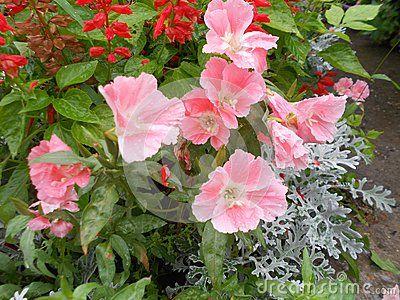 An interesting bouquet was formed by itself.  Garden flowerbed in Kazakhstan.