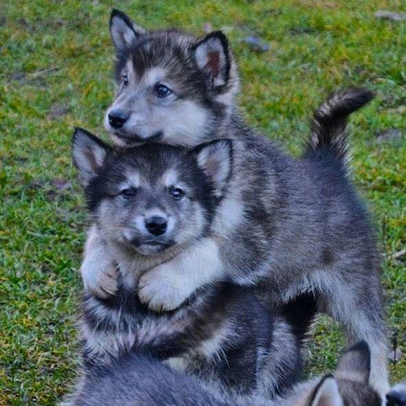 Cute animals celebrate International Hug Day   Adorable baby ...