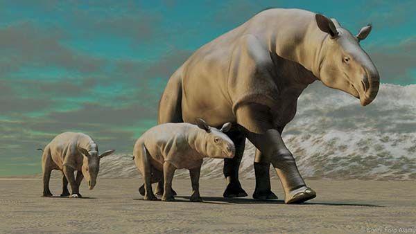 وحش بلوخستان أو Baluchitherium  أو paraceratherium