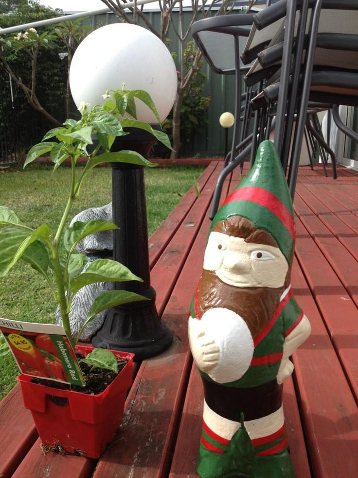 Chris Martin received this fantastic garden gnome for Christmas from his daughter. @Chris_Martin__ on twitter