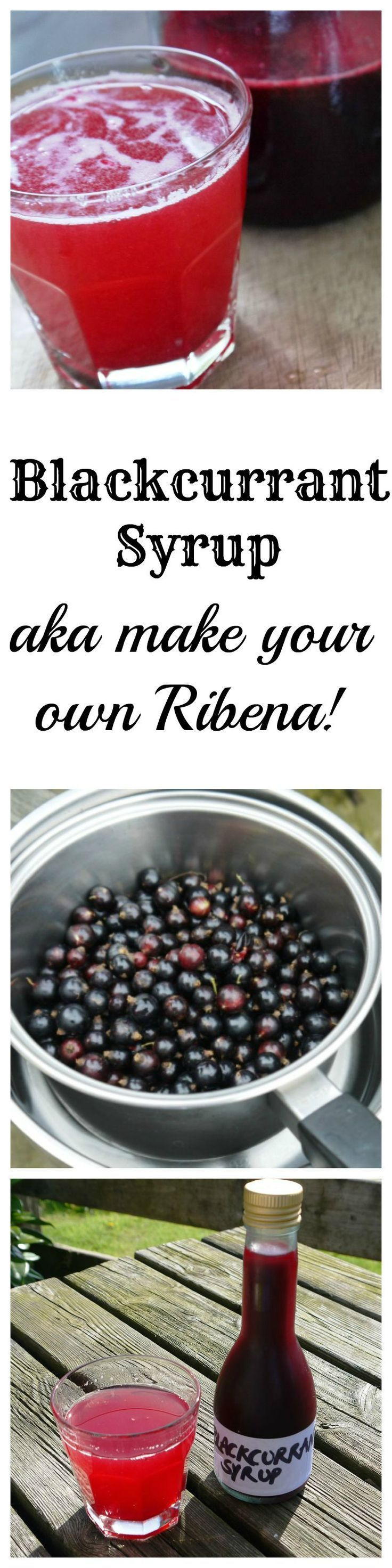 Make your own Ribena from fresh blackcurrants | The Hedgecombers
