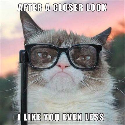 Grumpy Cat practices optometry.