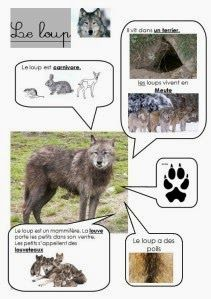 B.I. DOS ANIMAIS DA FLORESTA E OUTROS                             http://lespatouillesdebout2fee.over-blog.com/article-mais-qui-es-tu-10361...