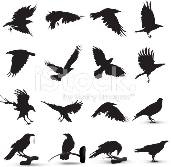 Raven Silhouette royalty-free stock vector art