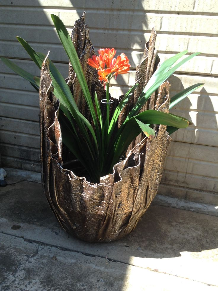 Plant n clivia in of mooi plant
