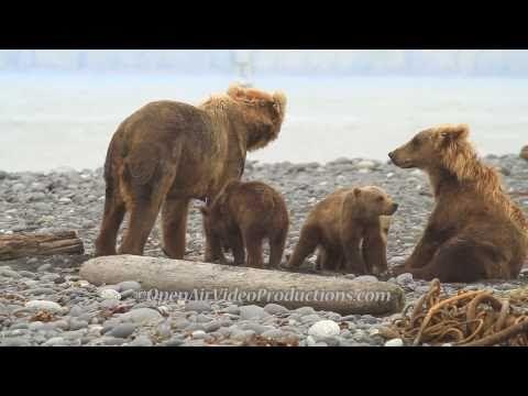 Alaska's Great Kodiak Bears - Ayakulik Adventures - YouTube