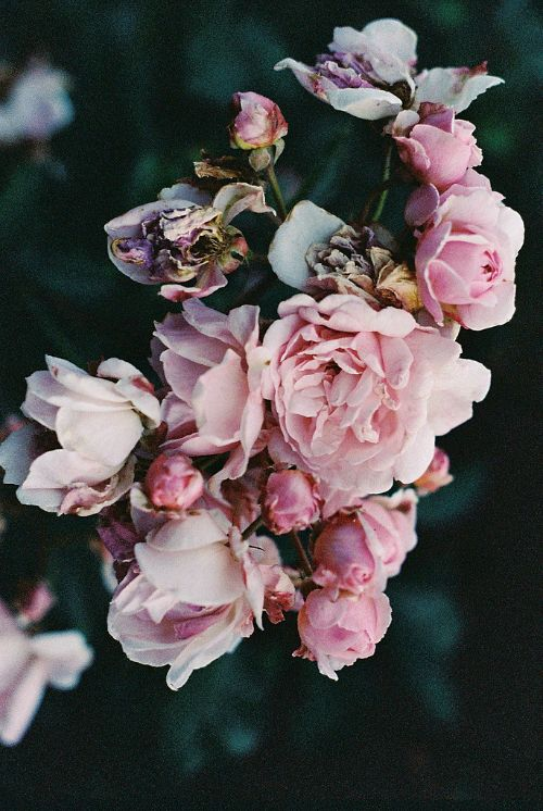 beautiful pink flowers 259 best pink flowers images on pinterest bridal bouquets