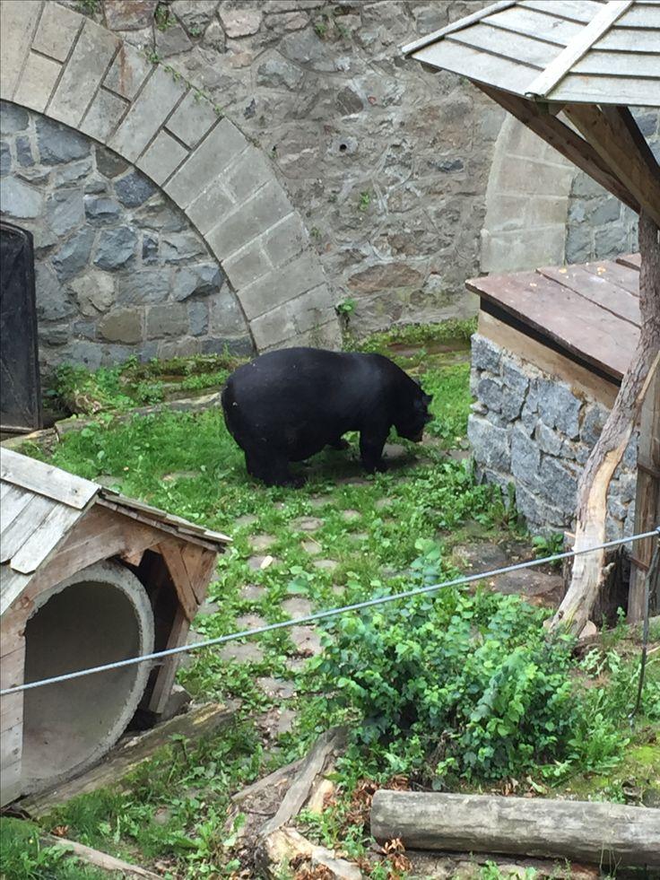 Medvěd Jirka