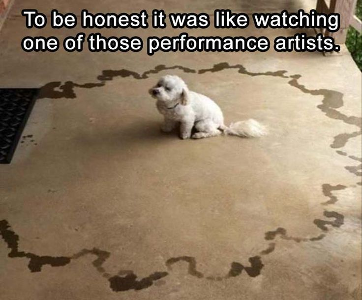 Image result for dog pee meme it was like watching a performance artist