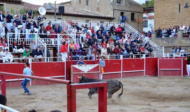 Santacara: Vacas de Santos Zapateria - (2)