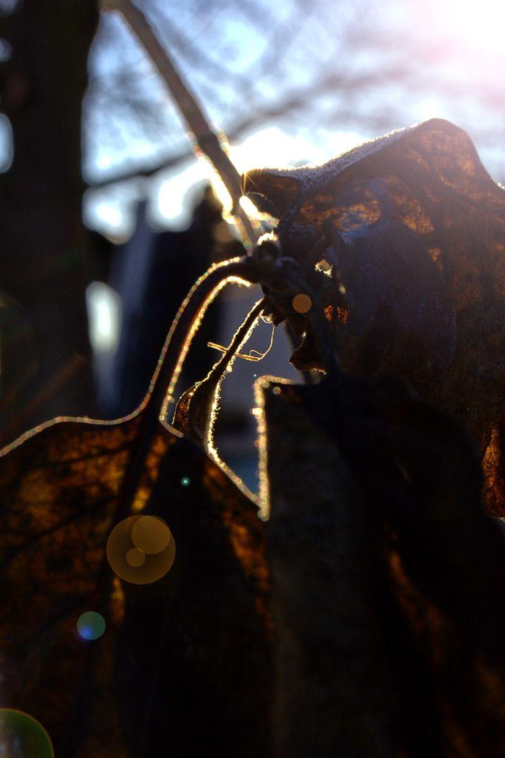 Zelovits Gábor Dermedség. Uralkodik már egy picit a reggeli kis dermedtség  de mint minden oly gyorsan mulandó, e kis hidegség is  a jótékony kis fény,gyógyítja  e szertefoszló álmot s ha picit megállunk a természet adta szoboravatónál meglátjuk testében a szépség mulandóságát.   Több kép Gábortól: www.facebook.com/gzelovits