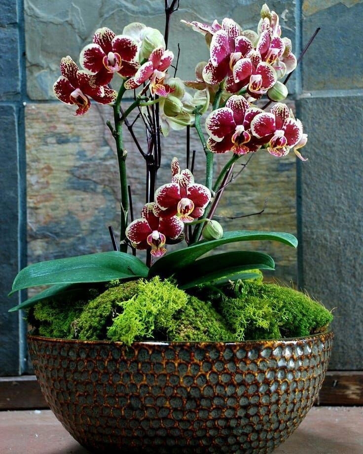 Nidia Perez On Instagram Bom Dia Buongiorno Bonjour Good Morning By Pinterest Orchid Planters Orchid Flower Arrangements Flower Pots Outdoor