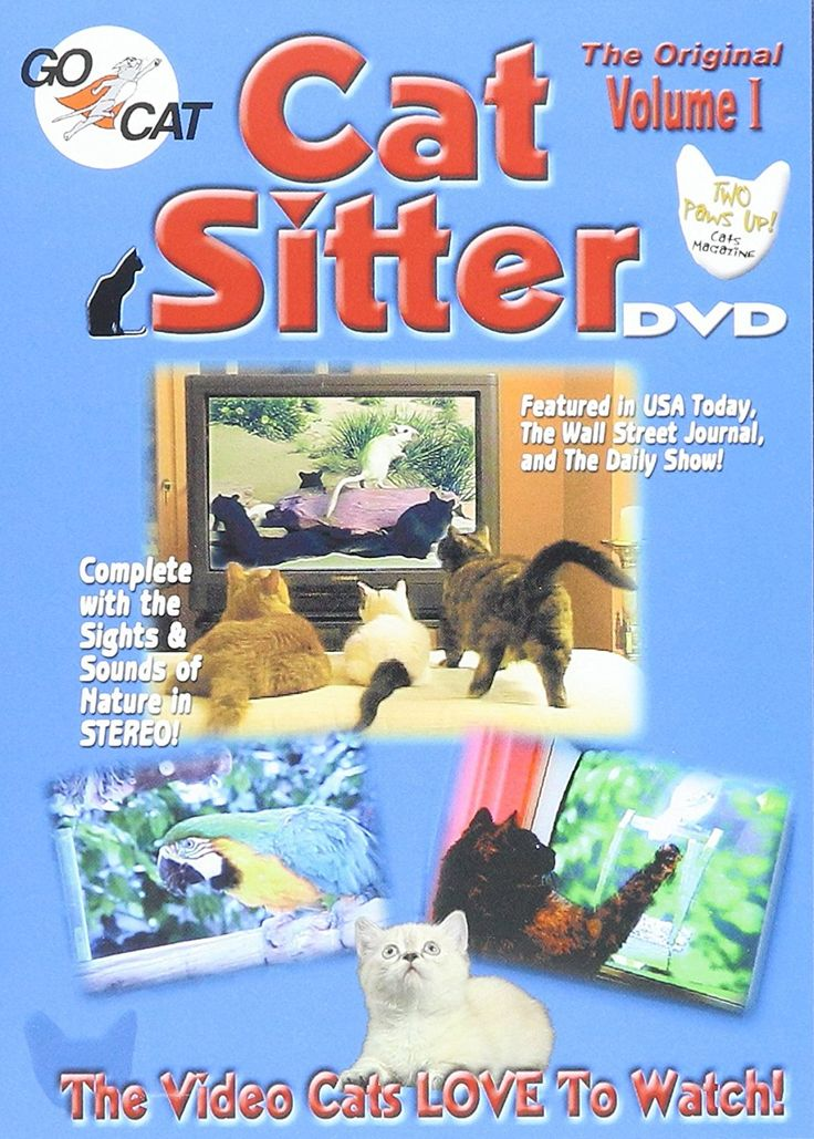 Cat Sitter DVD ** New and awesome cat product awaits you, Read it now  : Cat toys