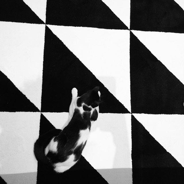 Oggi giornata all'ikea e pare proprio che a Kyoko piaccia il nuovo acquisto!!! Hoy día en Ikea y parece que a Kyoko le gusta la nueva compra #ikea #ikealove #ikealover #kyokostyles #tappeto #alfombra #carpet #blackandwhite #black end #white #cat #kitty #gatto #gato #kyoko #myhome