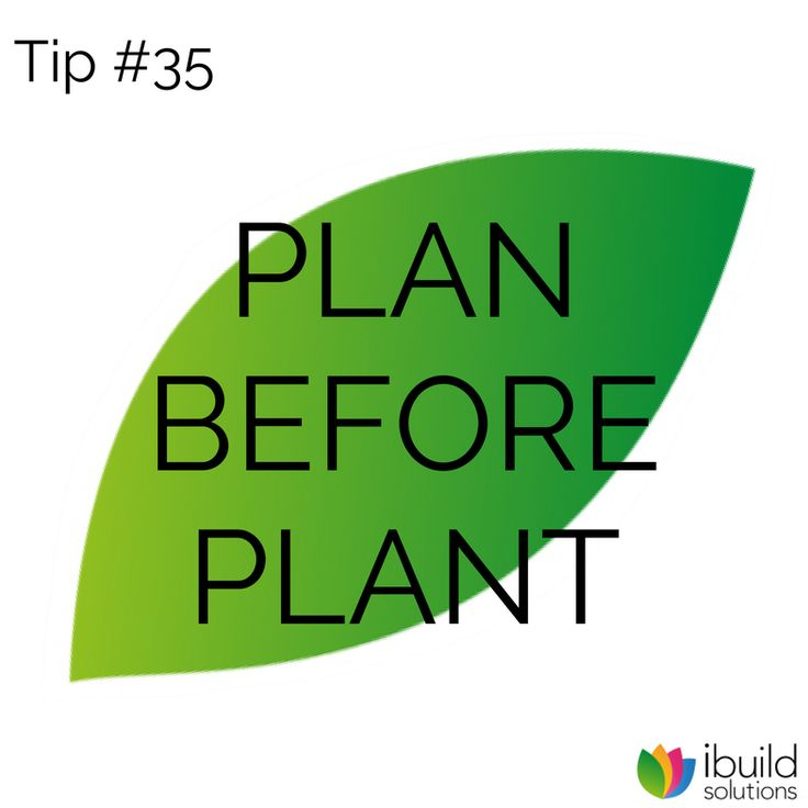 Ideally, basics, such as paths, garden taps, drains, provision for outdoor lighting, a service area for wheelie bins and maybe a clothesline, should be in place before buying plants. Plan for areas of both shade and sun, to provide year-round comfort and visual interest. And don't forget the needs of kids and pets.