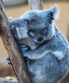 Best Hugs Images On Pinterest Nature Dog And Hugs - 25 heartwarming moments animals hugging