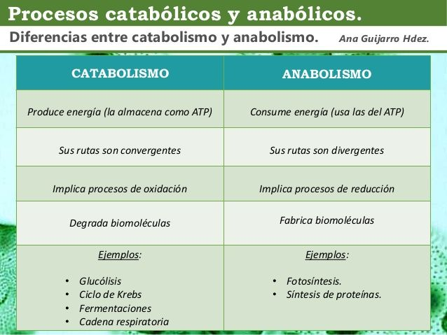 Comparacin Catabolismo Anabolismo Ana Guijarro Hernndez 1 638 Anabolismo Clase De Biología Biología Avanzada